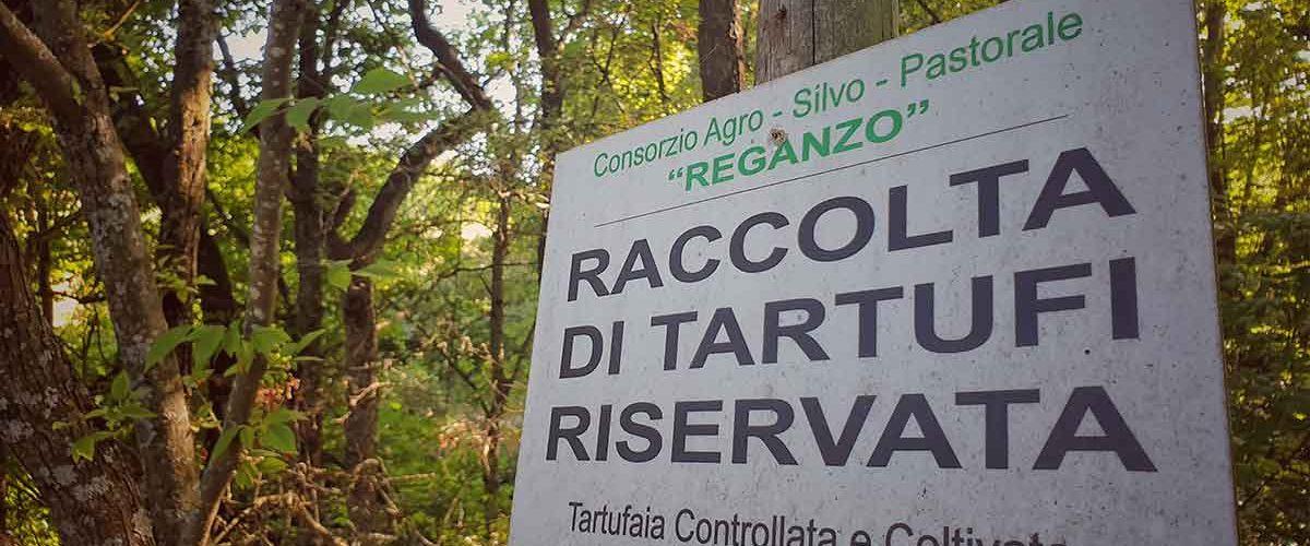 tartufi-img2